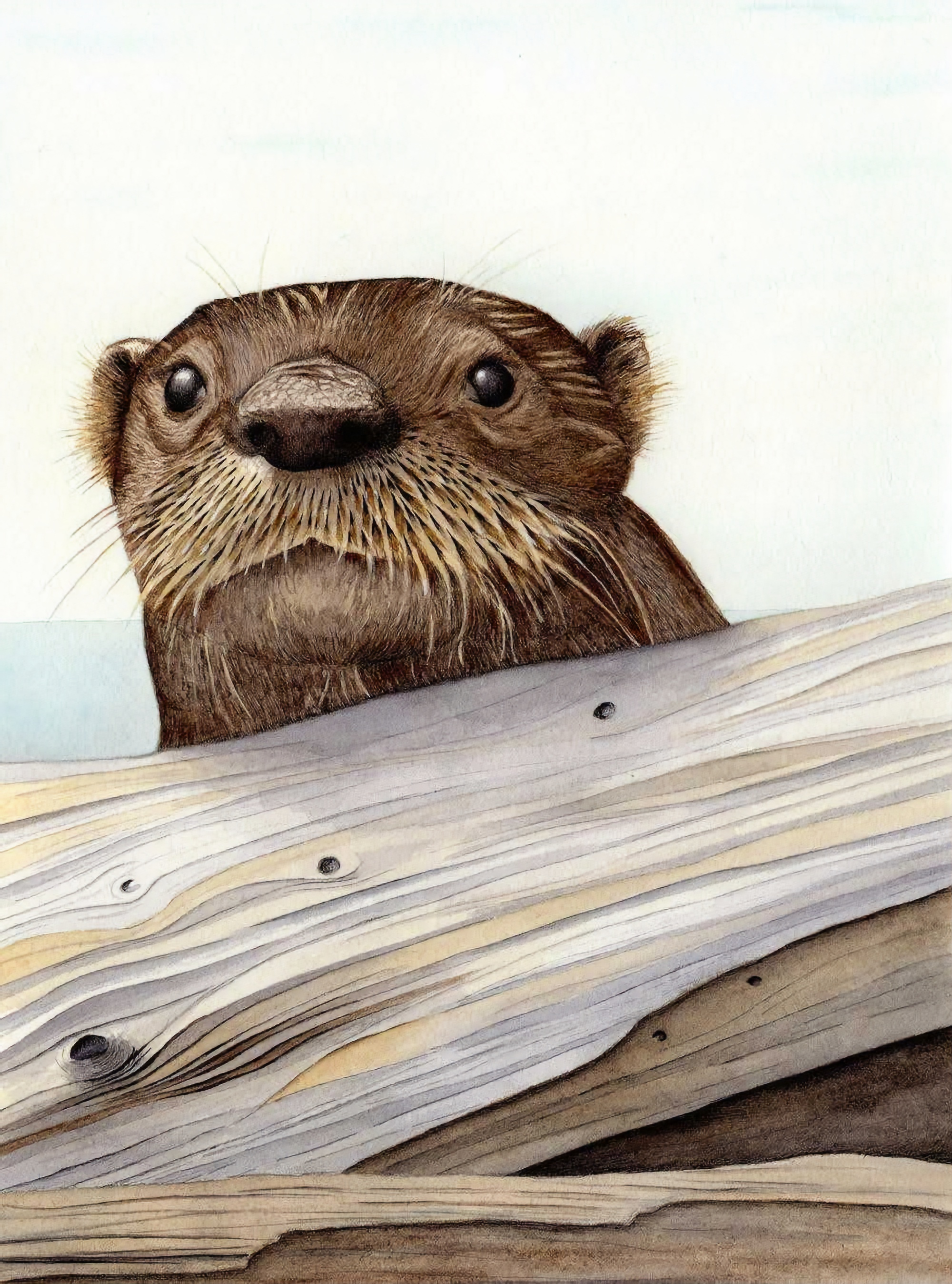 River Otter illustration by Nora Sherwood